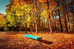 Sunny day in outdoor park with colorful autumn trees and bench Stock Image