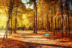 Sunny day in outdoor park with colorful autumn trees and bench Royalty Free Stock Images