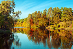 Sunny day in outdoor park with colorful autumn trees  Royalty Free Stock Photo