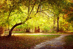 Sunny day in outdoor park with colorful autumn trees Royalty Free Stock Image