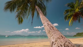 Sunny day palm tree beach panorama 4k time lapse phuket thailand stock video footage