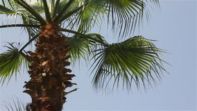 Sunny day and a palm tree. A palm tree on a sunny day and a blue sky stock footage