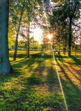 Sunny day. At the park, with beautiful trees stock images