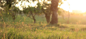 Sunny Day in the Park Royalty Free Stock Photography