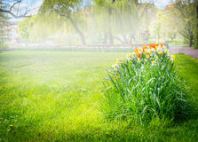 Sunny day in park, flower beds, blurred, boke Royalty Free Stock Photography