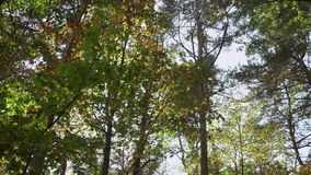 Sunny day in park or forest. stock video footage