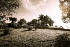 Sunny day in the park. Grass, trees, bushes, clouds. Toned Royalty Free Stock Images