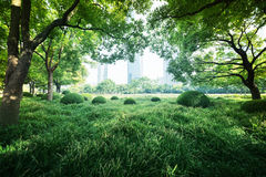 Sunny day in park Royalty Free Stock Images