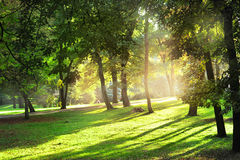 Sunny day in the park Royalty Free Stock Images