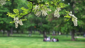 Sunny day in park-Unrecognizable people in the background. Sunny day in a city park-Selective focus on black locust branch stock footage