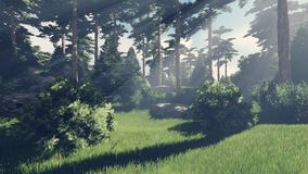 Sunny day in the pine forest 7 Royalty Free Stock Image