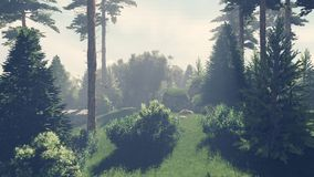 Sunny day in the pine forest 1 Royalty Free Stock Photos