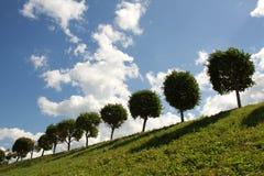 Sunny day. Round trees and blue sky Stock Photo
