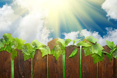 Sunny day with rural fence Royalty Free Stock Photo