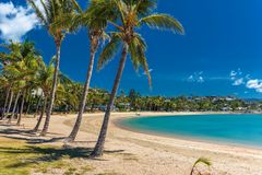 Sunny day on sandy beach with palm trees, Airlie Beach, Whitsund Stock Photo