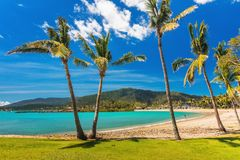 Sandy beach with palm trees, Airlie Beach, Whitsundays, Queensla. Sunny day on sandy beach with palm trees, Airlie Beach, Whitsundays, Queensland Australia Royalty Free Stock Photo