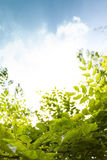 Sunny day sky with green leaves foreground Royalty Free Stock Photography