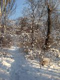 Sunny day after snowfall, trail in snowdrifts Royalty Free Stock Images