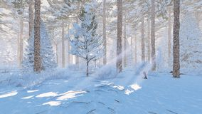 Sunny day in a snowy spruce forest. Winter landscape. Snow-covered pine forest at snowfall sunny day. Realistic 3D illustration was done from my own 3D rendering Royalty Free Stock Photo