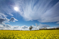 Sunny day. In spring, with yellow flowers. blue sky and white cloud Stock Photography