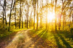 Sunny Day In Summer Forest. Sunbeams Pour Through Stock Image