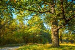 Sunny Day In Summmer Sunny Forest Trees, verde Imágenes de archivo libres de regalías