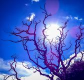 Sunnny day. Sunny day and sunlight coming through tree royalty free stock images