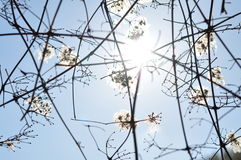 Sunny day. Tree. Branches in the sun rays Royalty Free Stock Images