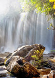 Sunny day at tropical rain forest landscape with flowing water o royalty free stock images