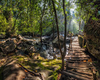 Sunny day at tropical rain forest landscape with wooden bridge a. Nd river near Kulen waterfall in Cambodia Royalty Free Stock Photography
