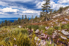 Sunny day in the Ural mountains. Flowers, leaves, trees, a fast mountain stream Stock Image