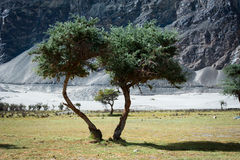 Sunny day view at Nubra Valley desert Royalty Free Stock Images