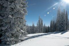 Sunny Day vinterunderland Royaltyfri Foto