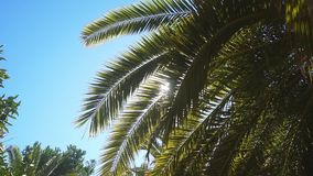 A sunny day in the warm South. The sun`s rays make their way through the leaves of the palm tree. A sunny day in the warm South. The sun`s rays make their way stock video