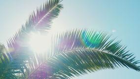 A sunny day in the warm South. The sun`s rays make their way through the leaves of the palm tree. Lens flare effect stock video