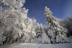 Sunny day in a winter forest. At Urals, Russia Stock Photos