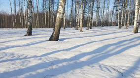 Sunny day in winter forest. Time lapse shoot of  moving shadows from trunks of trees in winter forest stock footage