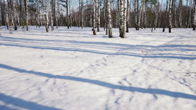 Sunny day in winter forest. Time lapse shoot of  moving shadows from trunks of trees in winter forest stock video footage