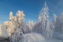 Sunny day in winter forest, ural mountains, winter forest, russian natu Royalty Free Stock Photos