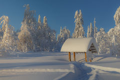 Sunny day in winter forest, ural mountains, winter forest, russian natu Stock Photography