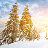 Sunny day in winter mountains Stock Image