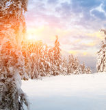 Sunny day in winter mountains. Sunny day in winter Carpathian mountains royalty free stock images