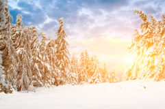 Sunny day in winter mountains Royalty Free Stock Image