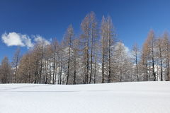 Sunny day in Winter season: Tree covered with snow Royalty Free Stock Photography