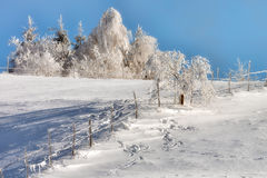 Sunny day of a winter, on wild Transylvania hills. Romania. Low key, dark background, spot lighting, and rich Old Masters Royalty Free Stock Photos