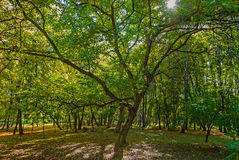 Sunny day in the wood Royalty Free Stock Photo