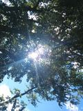 Sunny Days. A picture of the sun through leaves of a tree Royalty Free Stock Image
