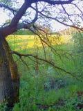 Sunny Days Stroll Again. For , , , , love, sunshine, green, lush, summer, spring, colour, fields, walks stock photography