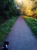 Sunny Days Stroll Again. For , , , , love, sunshine, green, lush, summer, spring, colour stock images