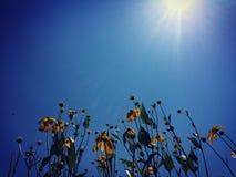 Sunny dayz. Sunny summer sky in NY & x28;with flowers& x29 Stock Photography